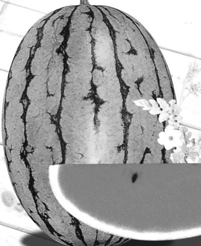 西瓜对土壤的适应性虽然较广,在沙土,黏土,水稻土,红壤土,新开垦的生